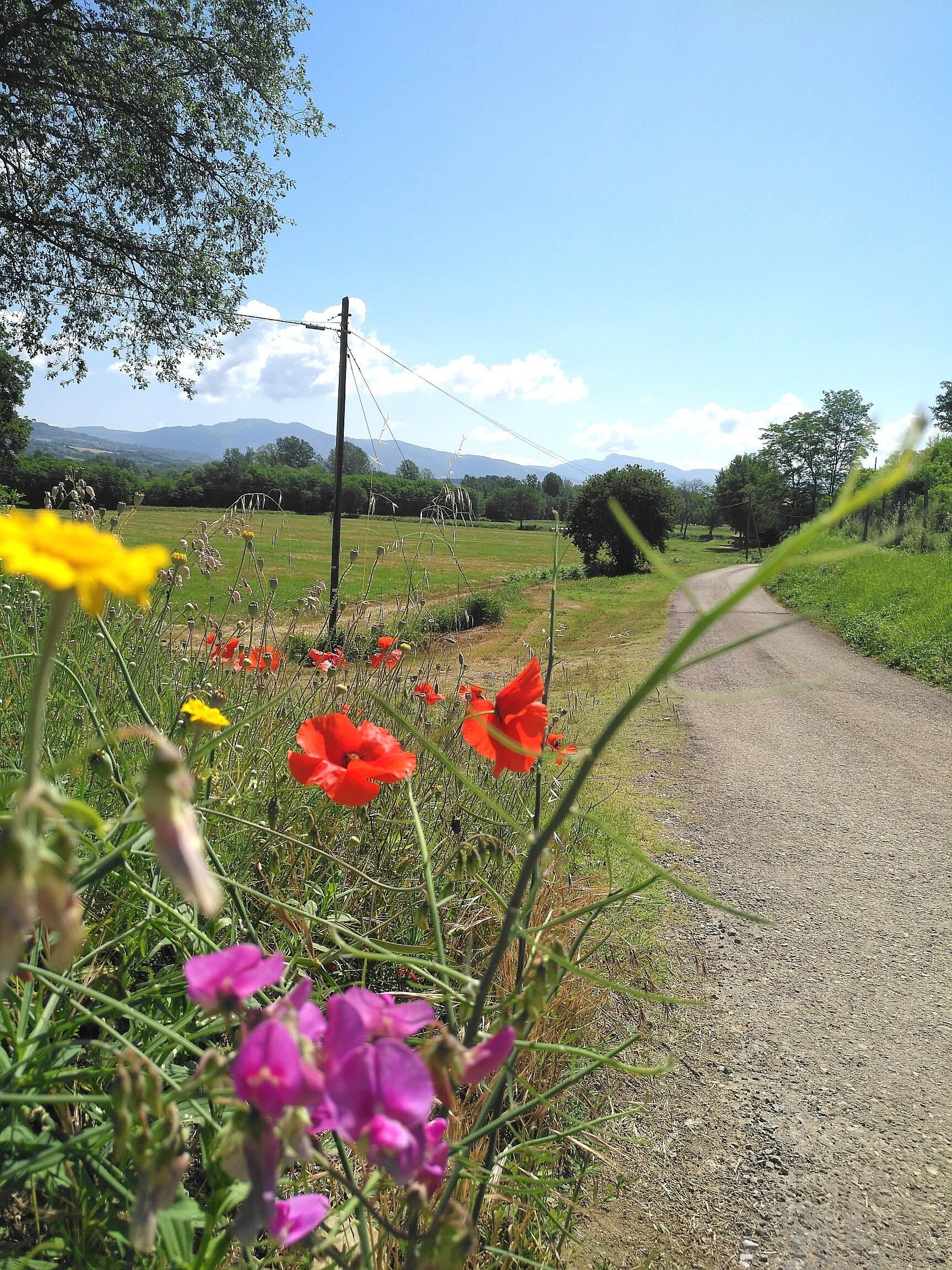 Via Ghibellina, Prato di Strada - La Verna