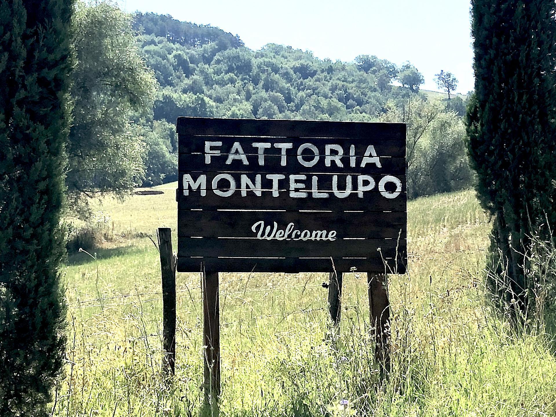 Fattoria Montelupo | Citerna - Città di Castello